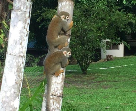 apen op de boom