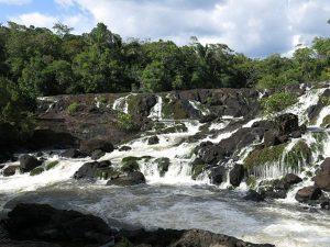 natuur in Suriname